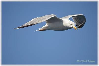 Ambition Photograph - Confident Flight by Sonali Gangane