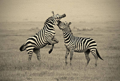Photograph - Confrontation In Stripes by Michele Burgess