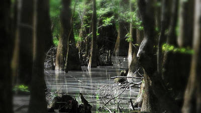 Photograph - Congaree Swamp Series 4 Of  5  by Cathy Harper