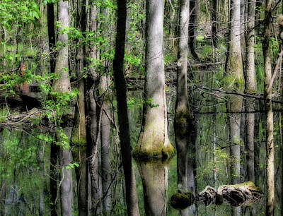 Photograph - Congaree Swamp Series 5 Of 5 by Cathy Harper