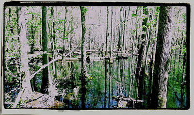 Photograph - Congaree Swamp Series  2 Of 5 by Cathy Harper