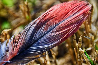 Congo African Grey Feather Art Print