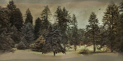 Photograph - Conifer Clan by Robin-Lee Vieira