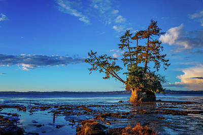 Traditional Bells Rights Managed Images - Conifer Island 2 Royalty-Free Image by Mike Penney