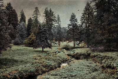 Photograph - Conifer Meadow by Robin-Lee Vieira