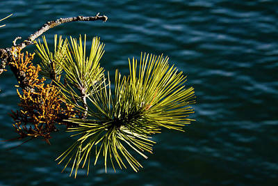 Photograph - Conifer Over Water by Albert Seger