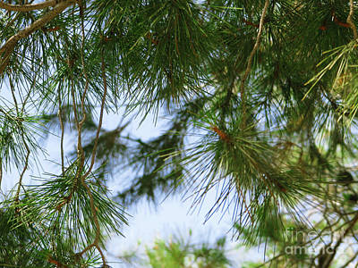 Photograph - Coniferous Cover by Donna Munro