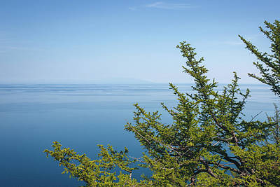 Photograph - Coniferous Trees On Blue Sky Background by Sergey Taran