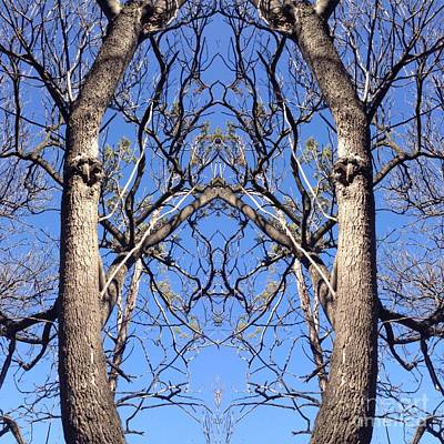 Photograph - Conjoined Tree Collage by Nora Boghossian