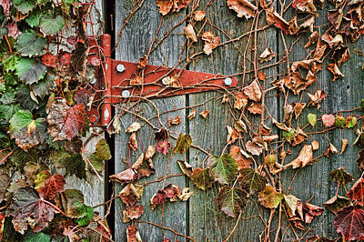 Photograph - Connection - Hinge by Nikolyn McDonald