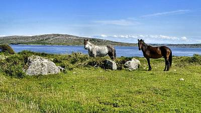 Photograph - Connemara Ponies by Joe Ormonde