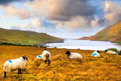 Connemara Sheep Grazing Over Killary Fjord Art Print by Mark E Tisdale