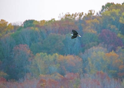 Photograph - Conowingo Colors With Bald Eagle by Jeff at JSJ Photography