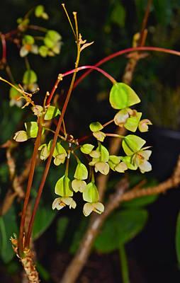Photograph - Conservatory Begonia by Janis Nussbaum Senungetuk