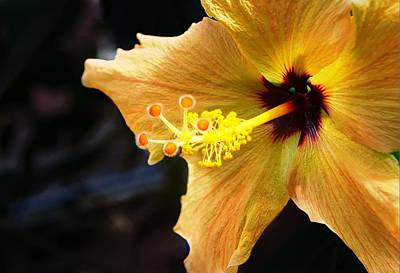 Lamberton Conservatory Photograph - Conservatory Hibiscus by Carol Deltoro