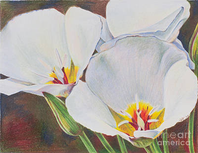 Lilies Drawings - Consider the Lilies by Alena Turner