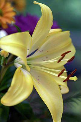 Photograph - Consider The Lilies by Marie Hicks