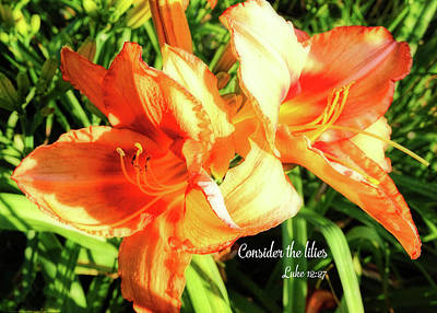 Photograph - Consider The Lilies - Orange Lily by Denise Beverly