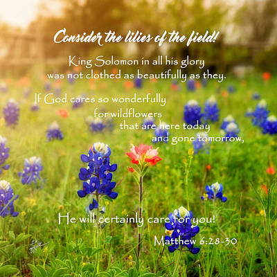 Photograph - Consider The Lilies by TK Goforth