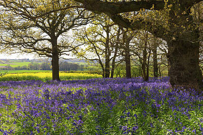 Photograph - Constable Country Bluebells by Gary Eason