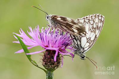 Contact - Butterflies On The Bloom Art Print