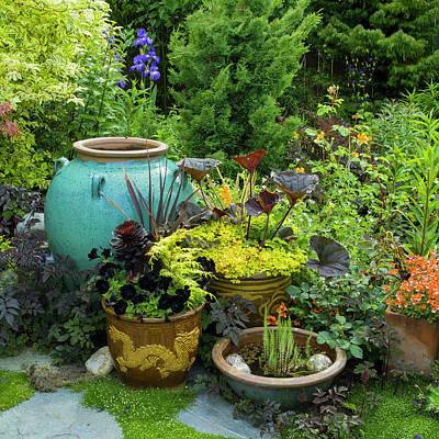 Photograph - Container Garden by Adam Gibbs