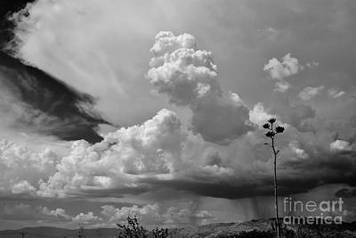 Rincon Mountains Wall Art - Photograph - Contemplating Clouds by Janet Marie