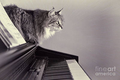 Piano Photograph - Contemplating Memory by Sharon McConnell