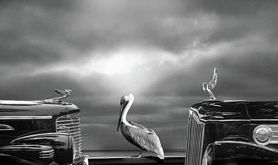 Digital Art - Contemplating The Pelican by Larry Butterworth