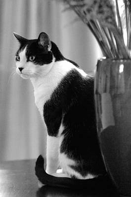 Photograph - Contemplative Cat Black And White by Jill Reger