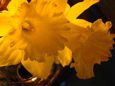 Contemporary Flower Artwork 10 Daffodil Flowers Evening Glow Art Print by Baslee Troutman