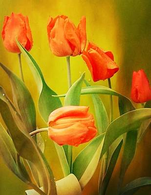 Photograph - Contemporary Orange Tulips by Kathy Barney
