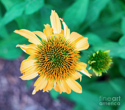 Photograph - Contemporary Yellow And Green Floral Photo Art 443 by Ricardos Creations