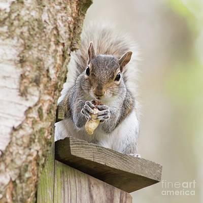 Contented Squirrel Art Print