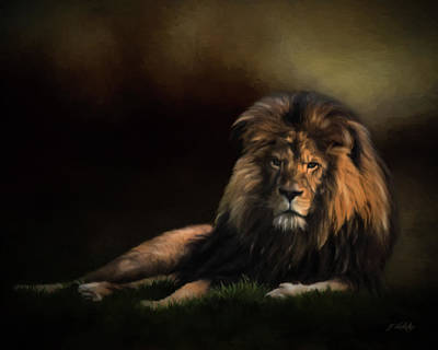Photograph - Continue The Journey - Lion Art by Jordan Blackstone