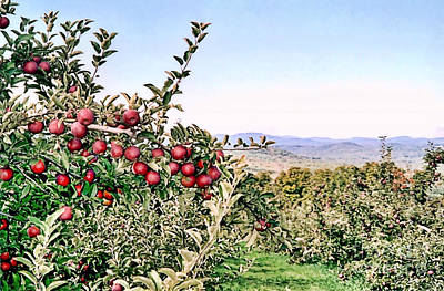 Photograph - Contoocook Nh Apple Orchard  by Janice Drew