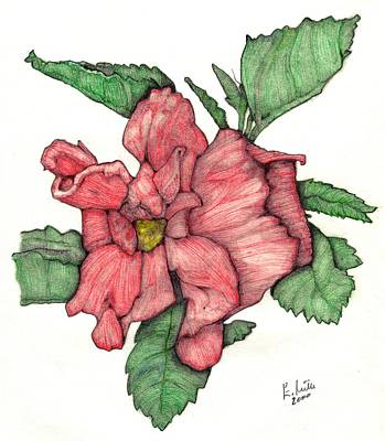 Contour Double Hibiscus Art Print by Edward Ruth