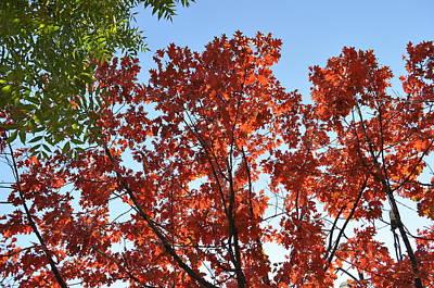 Outdoor Graphic Tees - Contrast in Autumn by Georgeta  Blanaru