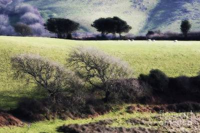 Photograph - Contrast Of Trees by Gary Bridger