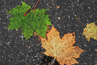 Digital Art - Contrasting Leaves by Patrick Groleau