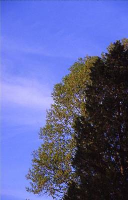 Contrasting Trees Against Sky Art Print by Randy Muir