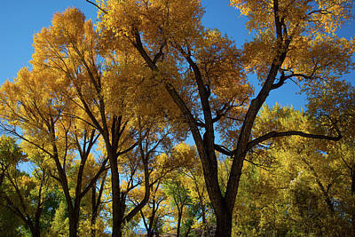 Photograph - Contrasts Of Fall by Frank Madia