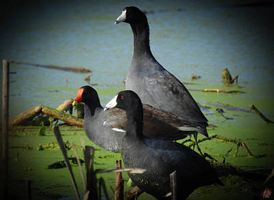 Animals Photos - Conversations In The Wetlands, No. 3 by Elie Wolf