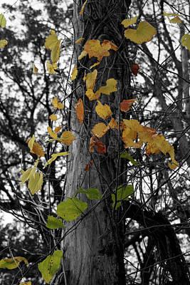 Photograph - Convert by Dylan Punke