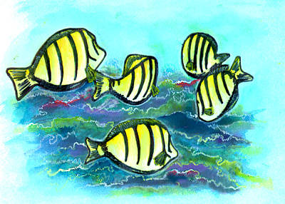 Convict Tang Fish #209 Art Print by Donald k Hall