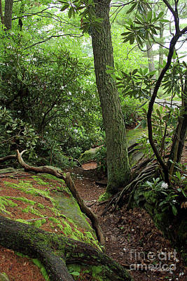 Photograph - Cook Forest by E B Schmidt