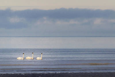 Not Your Everyday Rainbow - Cook Inlet Trumpets by Sylvia J Zarco