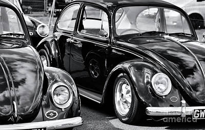 Photograph - Cool Beetles by Tim Gainey