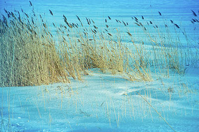 Photograph - Cool Blue Blowing In The Wind by Aimee L Maher Photography and Art Visit ALMGallerydotcom