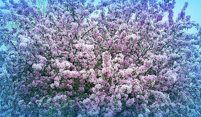 Photograph - Cool Blue Crab Apple Tree by Aimee L Maher Photography and Art Visit ALMGallerydotcom